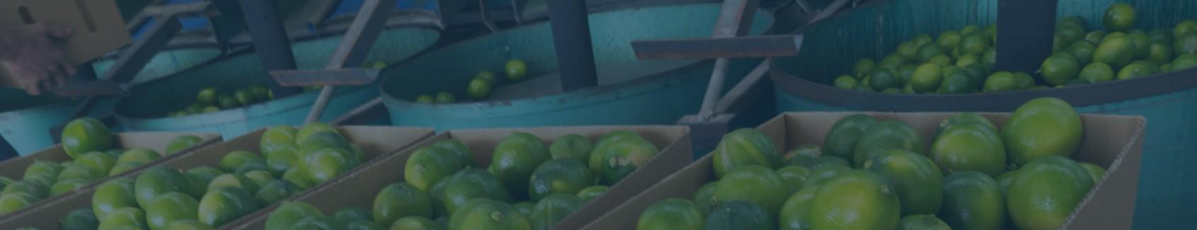 blue lime banner