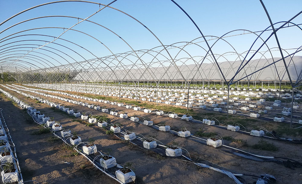 DATA MANAGEMENT FOR IRRIGATION: WHY IS IT IMPORTANT?